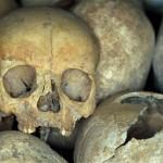 medieval vampire skull