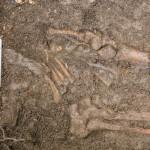 medieval-skeleton-tree-5