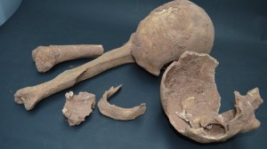 medeival Skull Coventry
